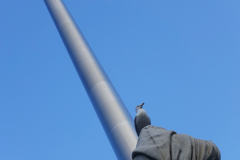 A little bit more of Fr Theobald Mathew, a bird, and the Spire